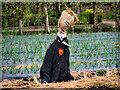 SJ7481 : Scarecrow in the Kitchen Garden at Tatton Park by David Dixon