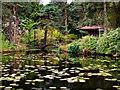SJ7481 : Shinto Shrine and Almond-eye Bridge, Tatton Park Japanese Garden by David Dixon