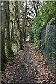 TQ7836 : High Weald Landscape Trail by N Chadwick