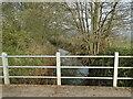 TM0880 : River Waveney upstream from Doit Bridge by Adrian S Pye