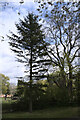TF0920 : A lone fir by Bob Harvey