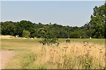 TQ4463 : High Elms Golf Course by N Chadwick