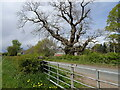 SO8390 : Tree View by Gordon Griffiths