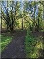 TF0820 : Spring sunlight by Bob Harvey