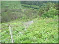 NH0247 : Deer fence towards Golden Valley by Chris Wimbush