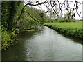 TM3390 : River Waveney downstream from the footbridge by Adrian S Pye