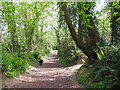 ST4410 : Bincombe Beeches nature reserve - Crewkerne by Sarah Smith