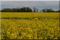 TM2773 : View across oilseed rape field from near Lime Tree Farm by Christopher Hilton