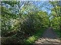 TF0820 : Wild apple tree by Bob Harvey