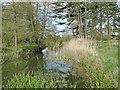 TM3052 : River Deben at Ufford by Adrian S Pye