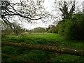 TG2731 : Wet Grassland by David Pashley