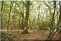 TQ5658 : Cockney's Wood by N Chadwick