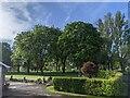 TF0820 : Trees on the green by Bob Harvey