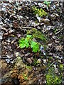 TF0820 : Brand new tree by Bob Harvey