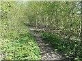 SE8843 : Path on the railway embankment, Goodmanham by Christine Johnstone