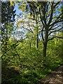 TF0820 : Springtime by Bob Harvey