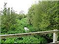 TM1762 : Downstream from the Kenton Road bridge by Adrian S Pye