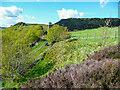 SE1027 : Large judd wall, Northowram by Humphrey Bolton