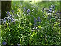 TF0820 : Late spring sunshine by Bob Harvey