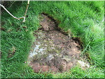 NZ6606 : Stone trod near Hunter Sty Bridge by T  Eyre