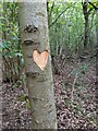 TF0820 : Loving vandalism by Bob Harvey