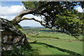 SX4780 : View under a tree on Brent Tor by Des Blenkinsopp
