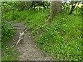 TF0820 : Young pheasant by Bob Harvey