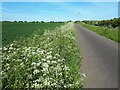 SP3602 : Cow parsley alongside the lane to Cote by Vieve Forward