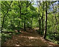 SP0075 : North Worcestershire Path at Lickey Hills by Mat Fascione