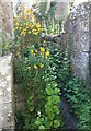 SE1785 : Wallflowers and Jack in the Hedge in a passage at Jervaulx Abbey by Rich Tea
