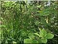 TF0820 : Grass seedheads by Bob Harvey
