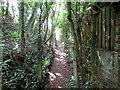 SX9983 : East Devon Way south of Lympstone by Roy Hughes