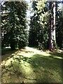 ST8590 : Lime Avenue, Westonbirt Arboretum by Alan Paxton