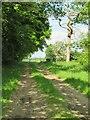 NZ3307 : Farm track off Eryholme Lane by Gordon Hatton