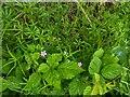 TF0820 : Geranium robertianum, by Bob Harvey