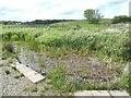 NK0558 : Dipping pond, Strathbeg Loch RSPB reserve by Oliver Dixon