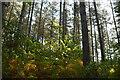 TQ8523 : Bixley Wood by N Chadwick