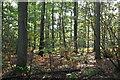 TQ8522 : Bixley Wood by N Chadwick