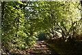 TQ8522 : Bixley Lane by N Chadwick