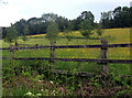 SO3402 : Trees beyond a wooden fence, Monkswood, Monmouthshire by Jaggery