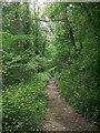 SS8979 : Path in woodland at Craig-y-Parcau Local Nature Reserve, Bridgend by eswales