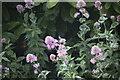TF0919 : Flowers by Bob Harvey