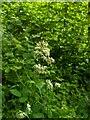 TF0820 : Grass flower by Bob Harvey