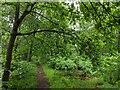 TF0820 : Dripping woodland by Bob Harvey
