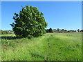 SE1414 : Footpath near Huddersfield by Malc McDonald