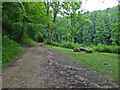SO8001 : Path in Woodchester Park by Chris Allen