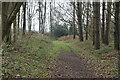 TG1741 : Track, Row Heath by N Chadwick