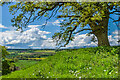 SO4133 : Cockyard Tump by Ian Capper