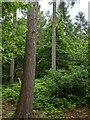 TF0820 : Tree trunks by Bob Harvey