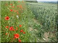 TQ6561 : Poppies at the top of a cornfield by Marathon
